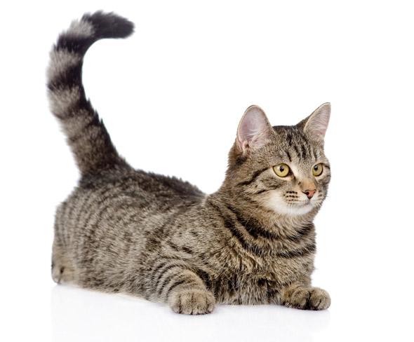 Kat met buik op vloer