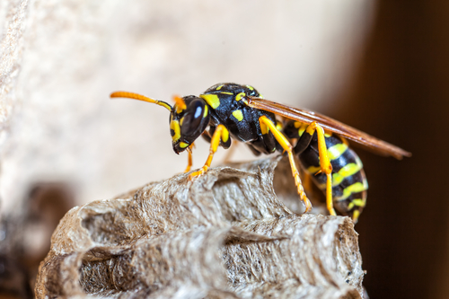 How To Treat A Hornet Sting On A Dog