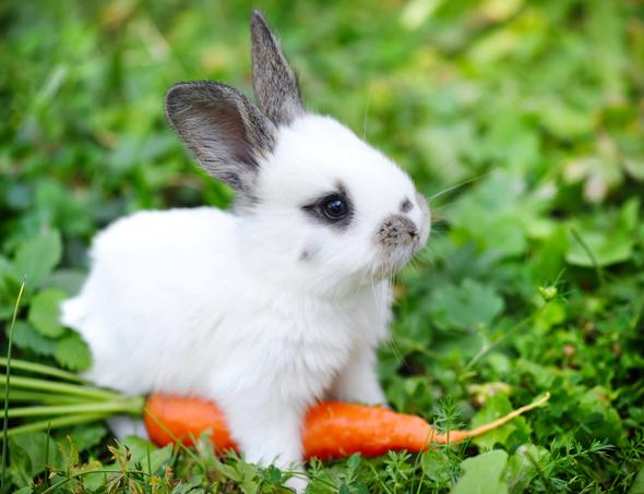 baby konijn met wortel