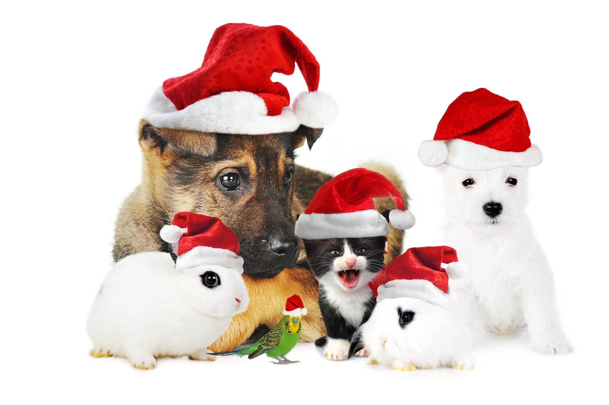 Fijne kerstdagen en de beste kerstwensen voor mens en dier - DierenBox