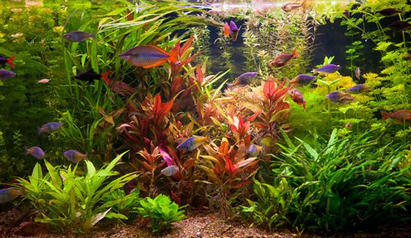 aquarium met vissen